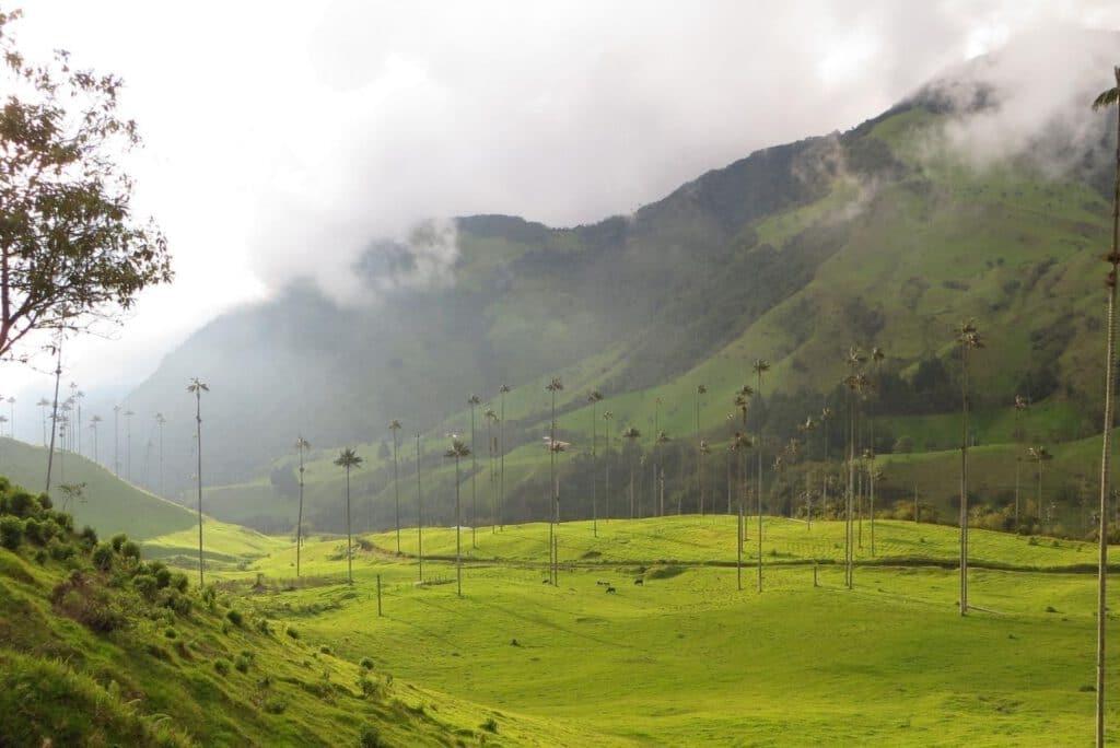 Cocora Tal Kolumbien